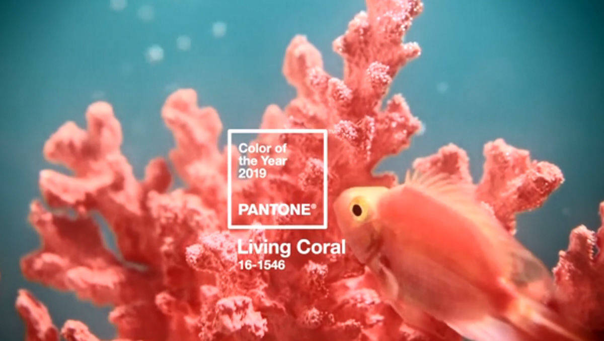 Pantone Kurt Living Coral Zur Trendfarbe 2019 W V